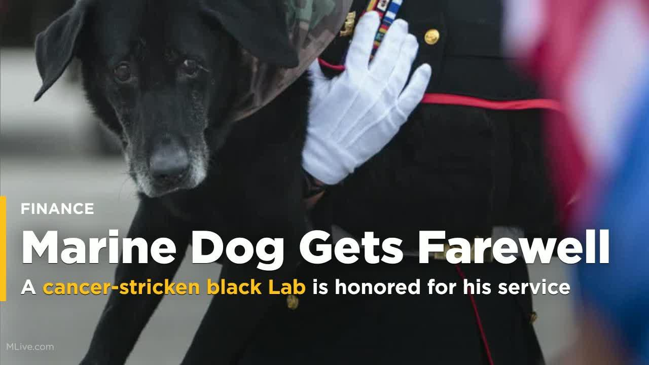 marine dog with cancer