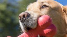 Dieses Spielzeug kriegt dein Hund nicht klein! Die besten Produkte von Kong