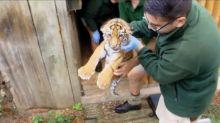 拼生存!動物園派生物學家募款 超萌無尾熊寶寶搶客