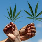 Why Canopy Growth Is Still a Better Marijuana Stock Than Aurora Cannabis
