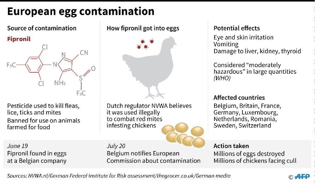Updated factfile on the egg contamination scandal in Europe (AFP Photo/John SAEKI)