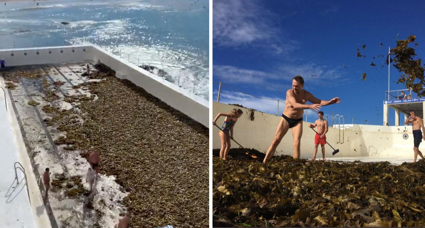 Famous Bondi pool drained after 'seaweed attack'