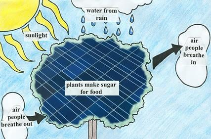New solar cell cuts out the middle man, harvests hydrogen from water