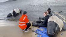 El rescate de las ballenas varadas en Australia entra en la fase final