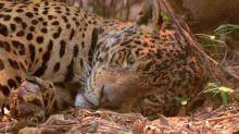 As histórias por trás de 3 fotos dos incêndios no Pantanal que viralizaram