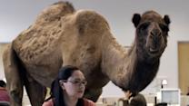 """""""Hump Day"""" commercial creators talk about their wildly successful ad"""