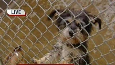 Pet Adoption Prices Reduced In Sacramento