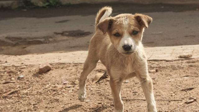 Sochi `disposing` of stray dogs before Olympics