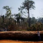 Amazon rainforest destruction increases rapidly as Brazil's far-right president Jair Bolsonaro slashes protections