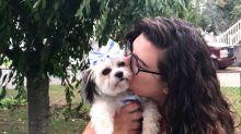 Perra roba dentadura a su dueño y su sonrisa se vuelve viral