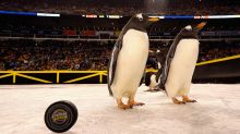 Real live penguins hit the ice before Penguins-Flyers outdoor game (Video)