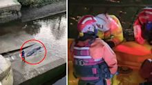Crowds 'in disbelief' over discovery in London's River Thames