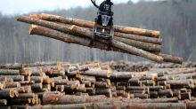 War of words over softwood