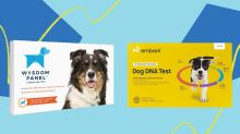 Cyber Monday 2020 Deals On Embark And Wisdom Panel Dog DNA Test Kits