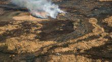 Biodiversidade no Delta do Paraná ameaçada por incêndios históricos