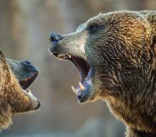 The 12 Best ETFs to Battle a Bear Market