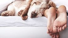 Is Your Pet Wrecking Your Sleep?