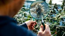 This Under-the-Radar Pot Stock Is Showing Signs of Life