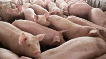 Malaysia bans Indonesian pork products as ASF precaution