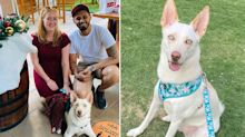Dog forgotten in hot car for 7 hours by pet daycare dies