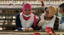 Gubernur:  telur ayam produksi peternak Jatim aman