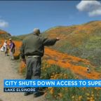 Super bloom shutdown: Lake Elsinore ends access to poppy display in Walker Canyon