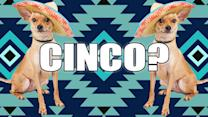 Why Do We Celebrate Cinco De Mayo?