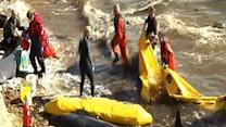 Raw Video: Stranded whales off Scottish coast