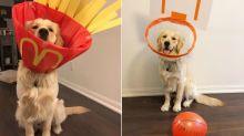 Dona transforma cone cirúrgico do cachorro em fantasias divertidas