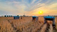 Technologies. Les robots agricoles de Google prêts à fondre sur les champs