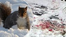 'Blood everywhere': Shocking attacks on residents by 'aggressive' squirrels