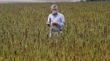 Hemp grower touts virtues of compostable masks