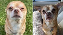 'Demonic': Brutally honest ad to find new owner for 'gremlin' dog