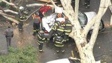 Queda de árvore sobre carro mata uma pessoa em São Paulo