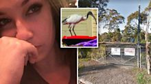 'Go kill yourself': Woman battling cancer abused online for trying to save ibis