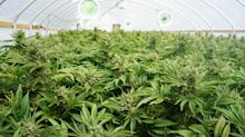 Canopy Growth: Key Takeaways from Its Investor Call