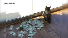 Office cat collects money for homeless by snatching from passers-by