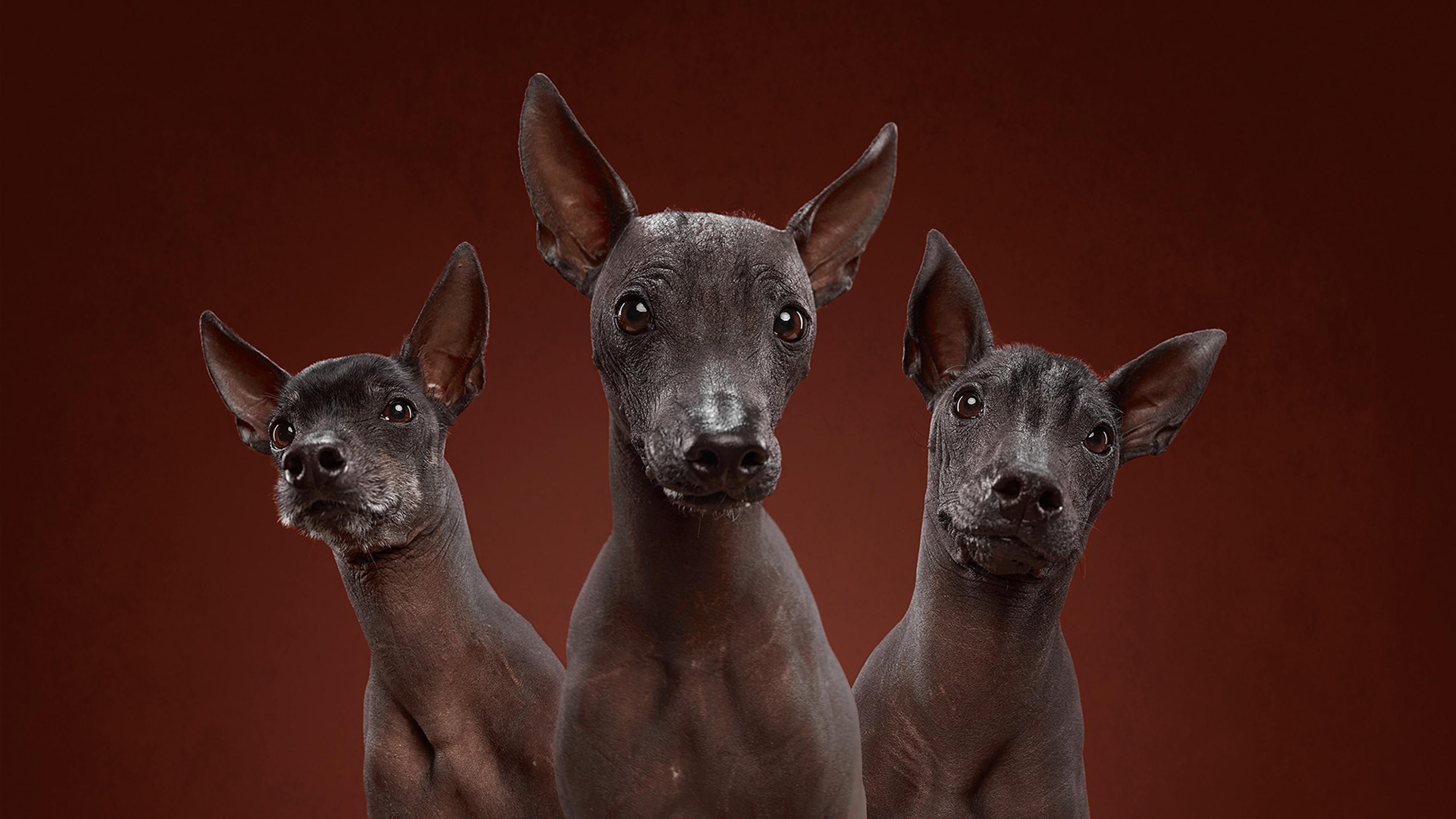 Pawtraits! Husband and wife capture diverse personalities of a wide variety of dog breeds