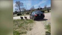 Man filmed dangerously dragging dog alongside his car