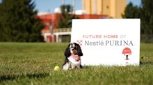 Nestle Takes Aim at the Booming Pet Food Market With a Big New Factory