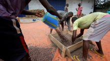 Child labour still prevalent in West Africa cocoa sector despite industry efforts -report