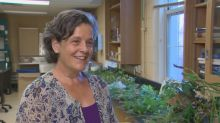 UNB herbarium plants its collection into online database to aid research