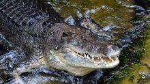 Polícia prende dois homens por transportar crocodilos em metrô da Cidade do México