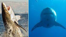 'Black demon': Truth behind Megalodon shark conspiracy