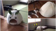 【新片速報】日本喵星人示範「泊車」 貓屋移位快而準