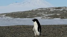 Antarctica's ice-free areas to increase by up to a quarter by 2100, study says