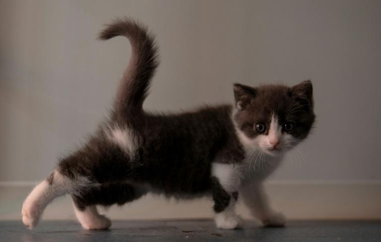 Copy cat: Chinese firm creates first cloned kitten