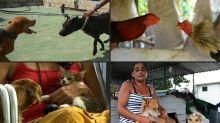 Bienestar animal, primera victoria de la sociedad civil en Cuba