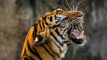 中國遊客丟石頭為看老虎動!盤點動物園遊客的誇張行為