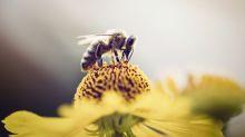 Les téléphones portables pourraient jouer un rôle dans la mortalité des insectes